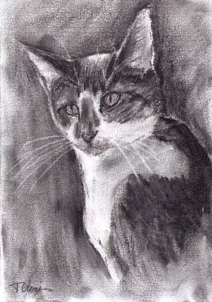 Drawing of a cat in charcoal