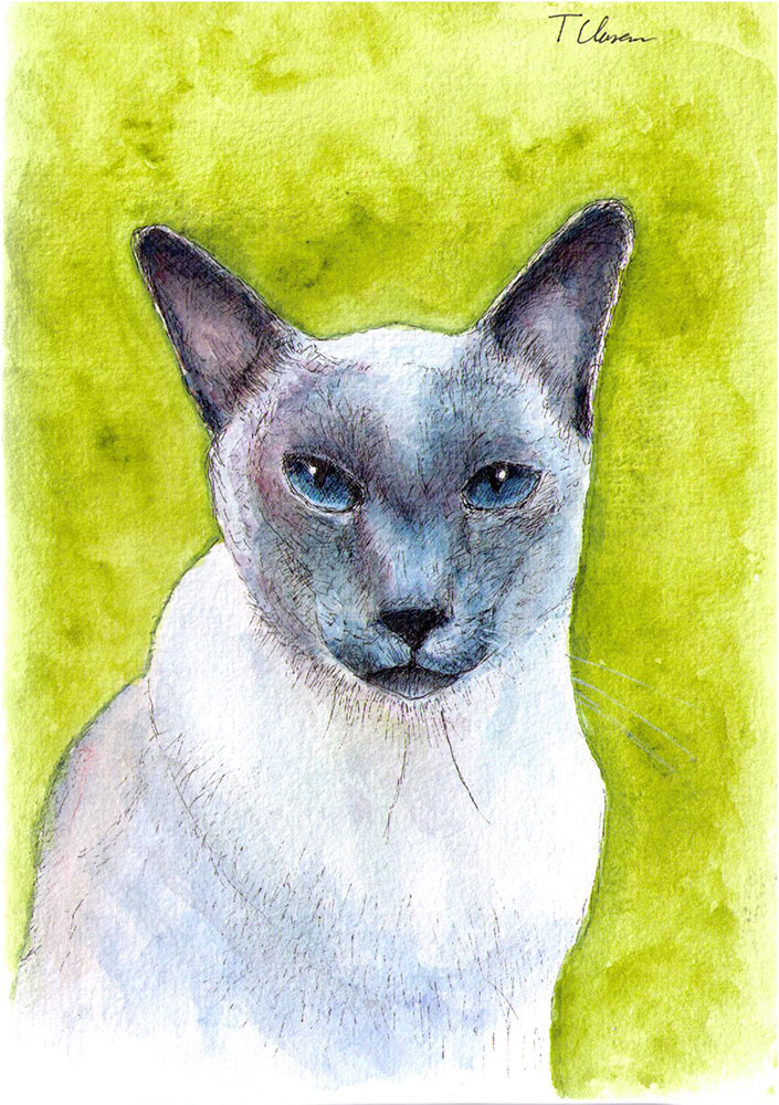 Drawing of a cat called Merlin in pen and watercolor