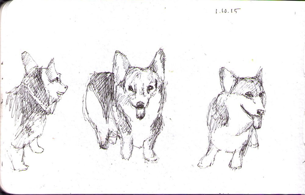 Sketch of three beagle dogs in pen