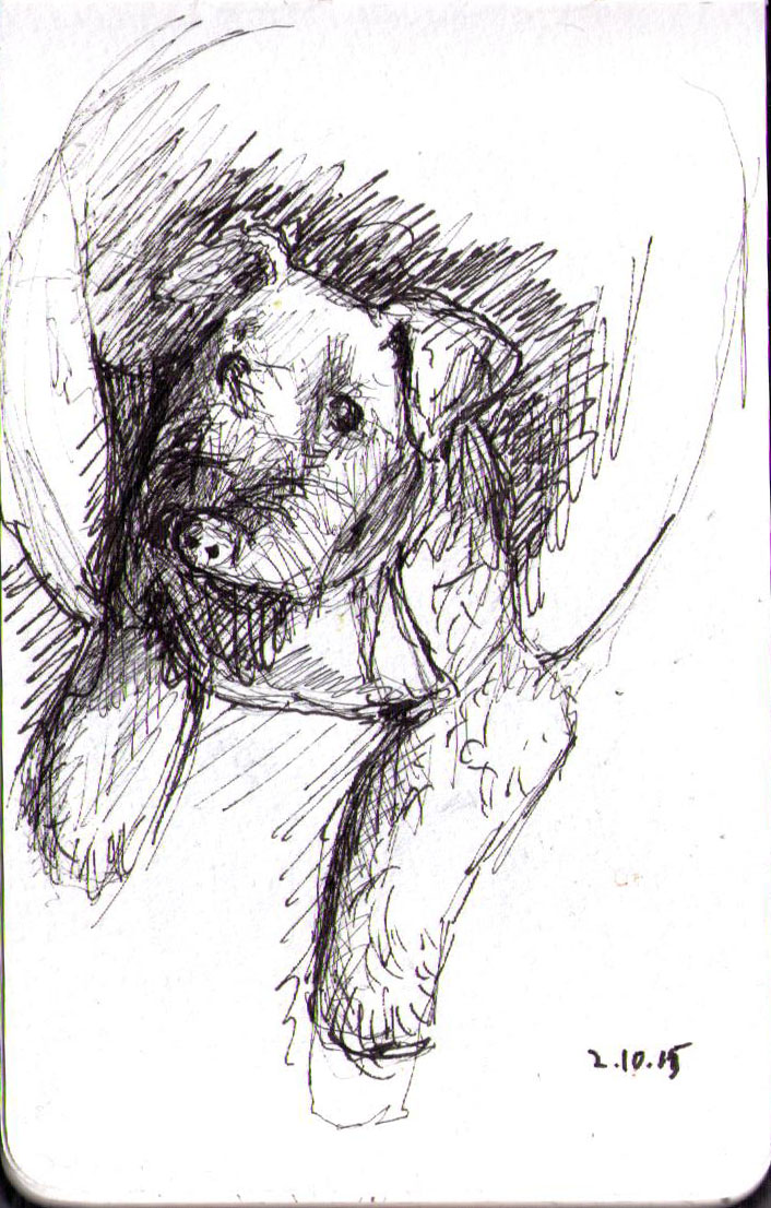 Sketch of a dog in pen