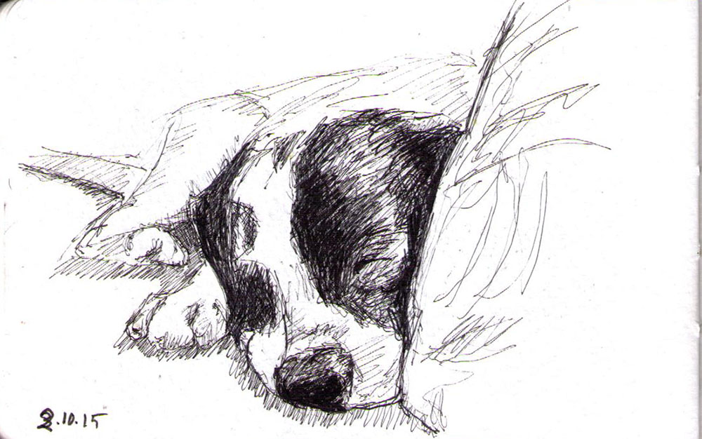 Sketch of a sleeping dog in pen
