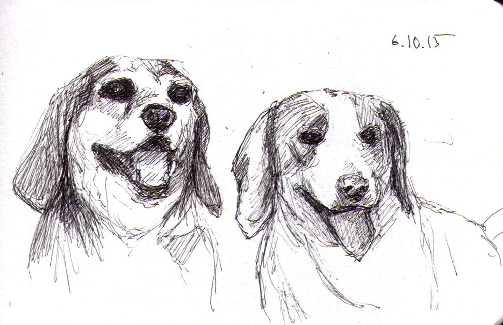 Sketch of two beagle dogs in pen