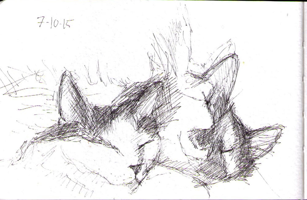 Sketch of two cats in pen