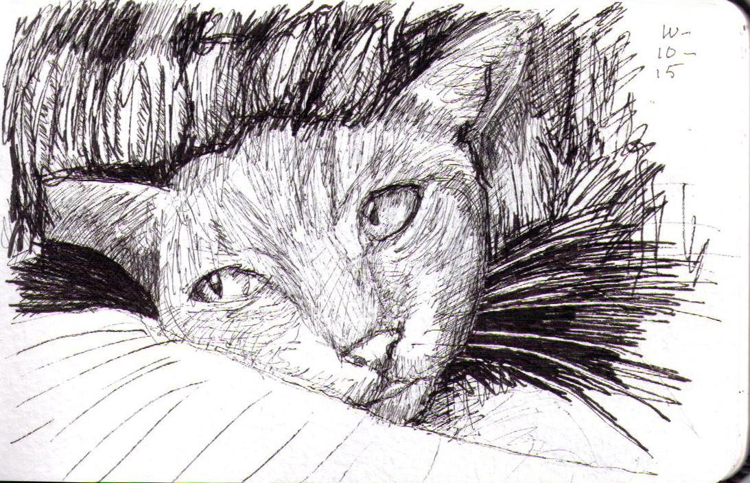 Sketch of a cat beneath blanket in pen