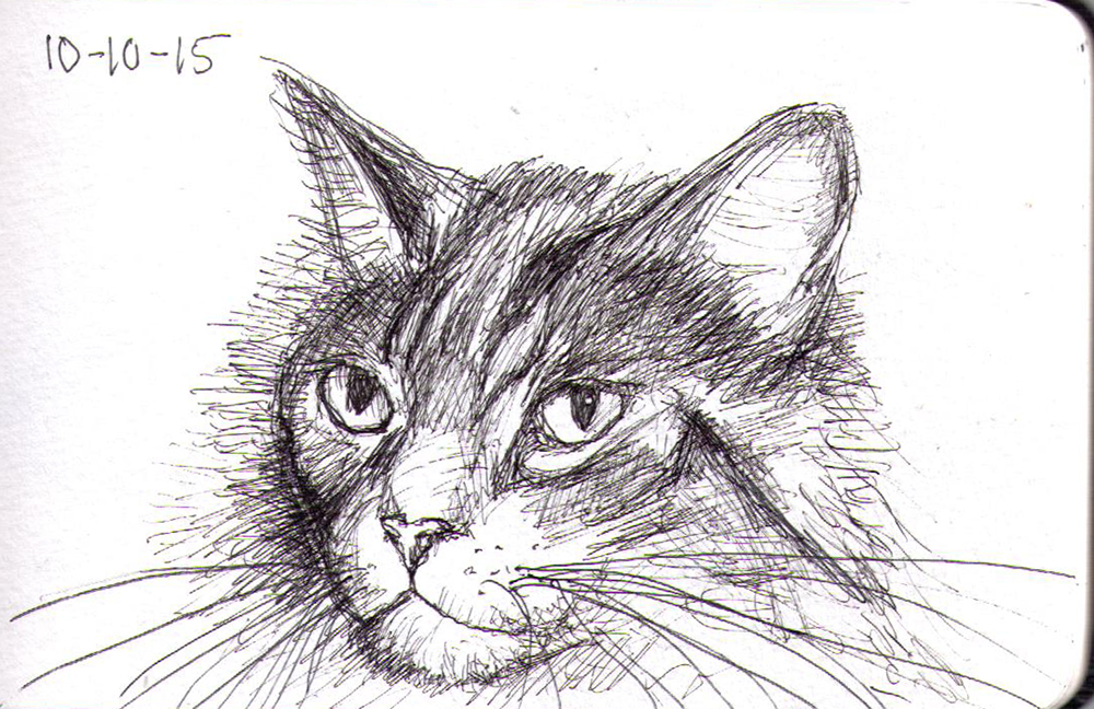 Sketch of a cat called Zee in pen