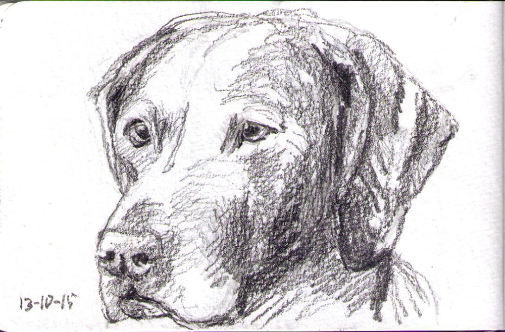 Sketch of a dog in pencil