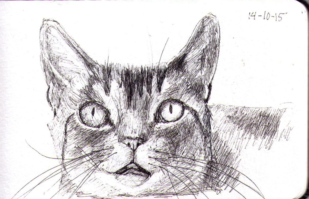 Drawing of a cat in pen
