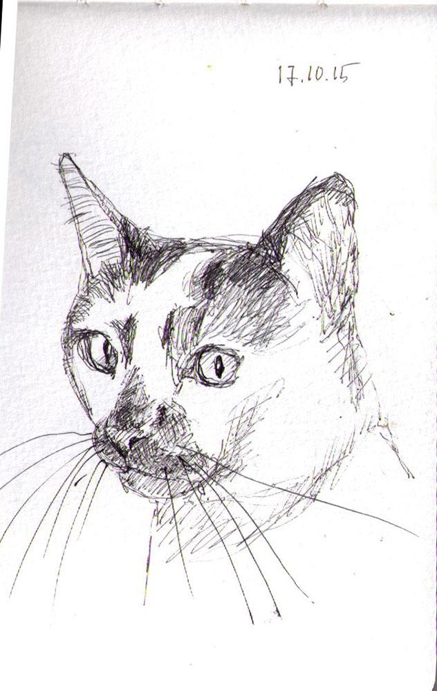 Sketch of a cat in pen