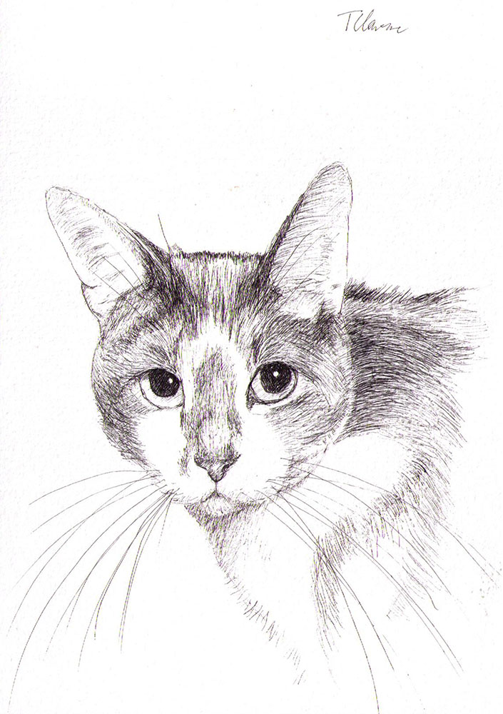 Commissioned drawing of a cat in pen