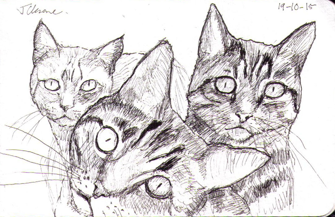 Sketch of three cats in pen