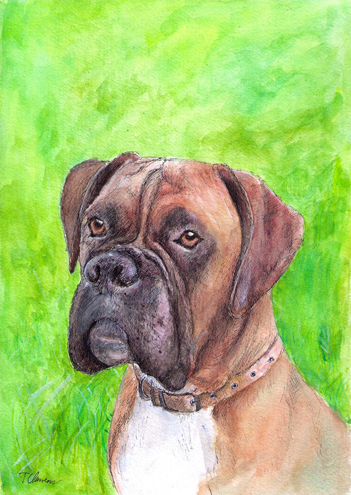Commissioned drawing of a boxer dog called Henry