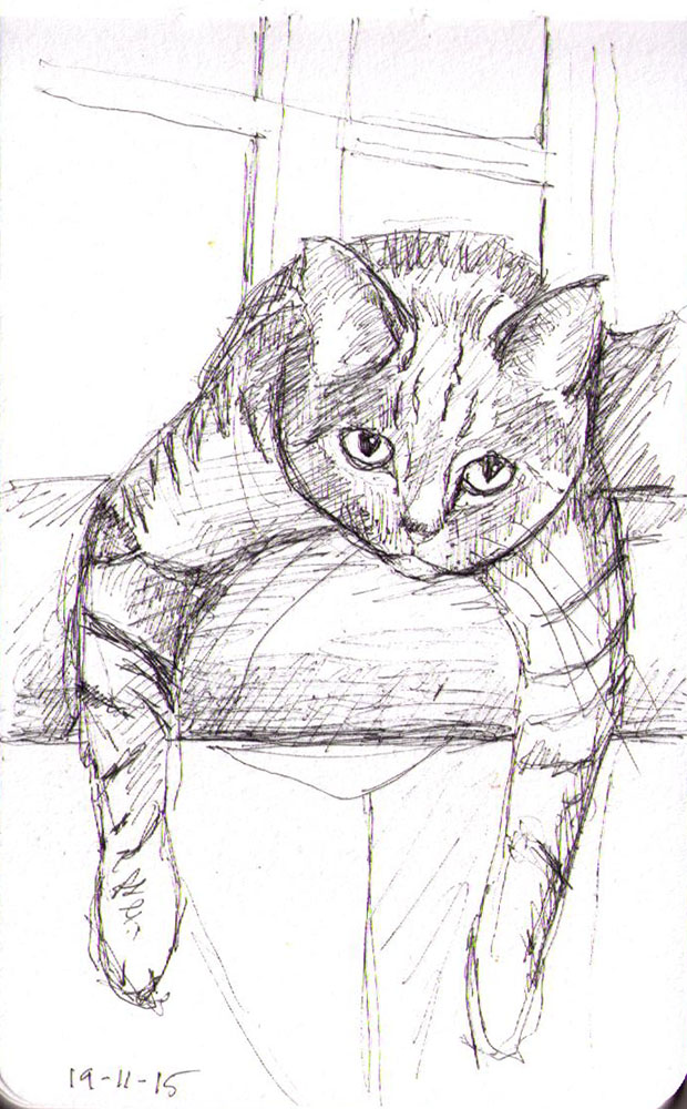 thomas-dalsgaard-clausen-2015-11-19a sketch of a lounging cat