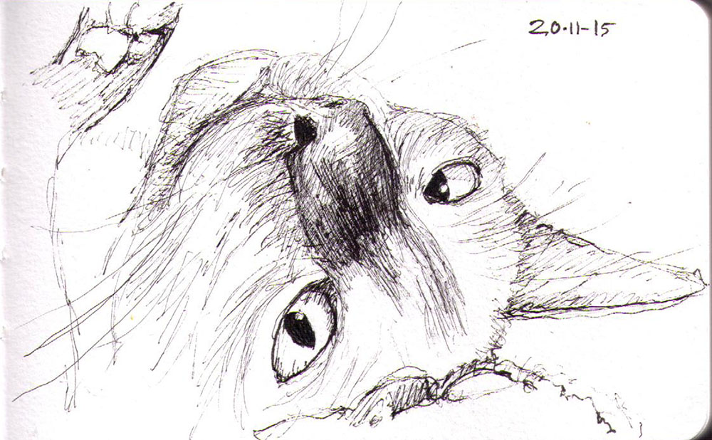 thomas-dalsgaard-clausen-2015-11-20a sketch of a cat