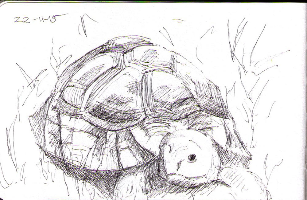 thomas-dalsgaard-clausen-2015-11-22a sketch of a turtle