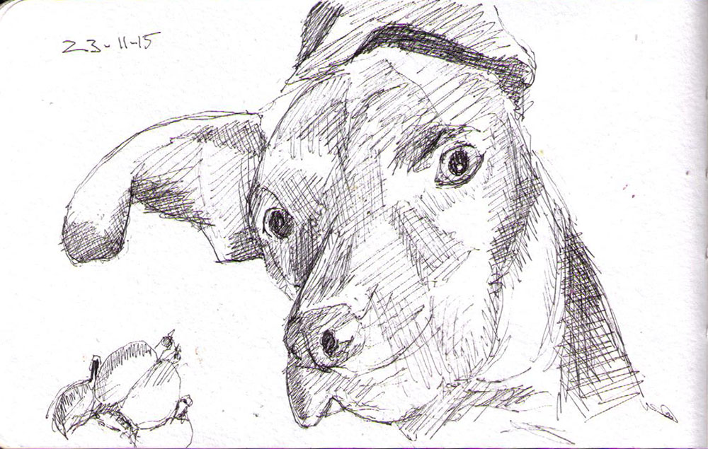 thomas-dalsgaard-clausen-2015-11-23b sketch of a lounging dog