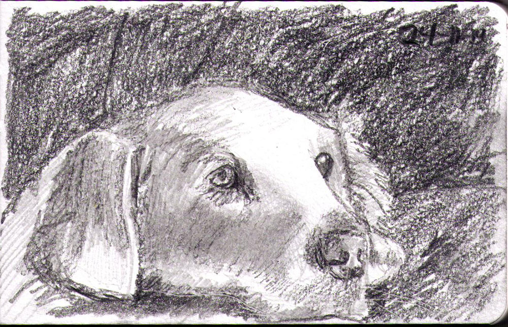 thomas-dalsgaard-clausen-2015-11-24a sketch of a lounging dog in pencil