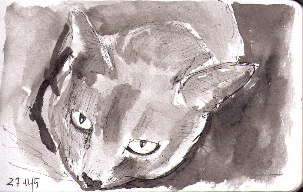 thomas-dalsgaard-clausen-2015-11-27a sketch of a cat in pen and ink