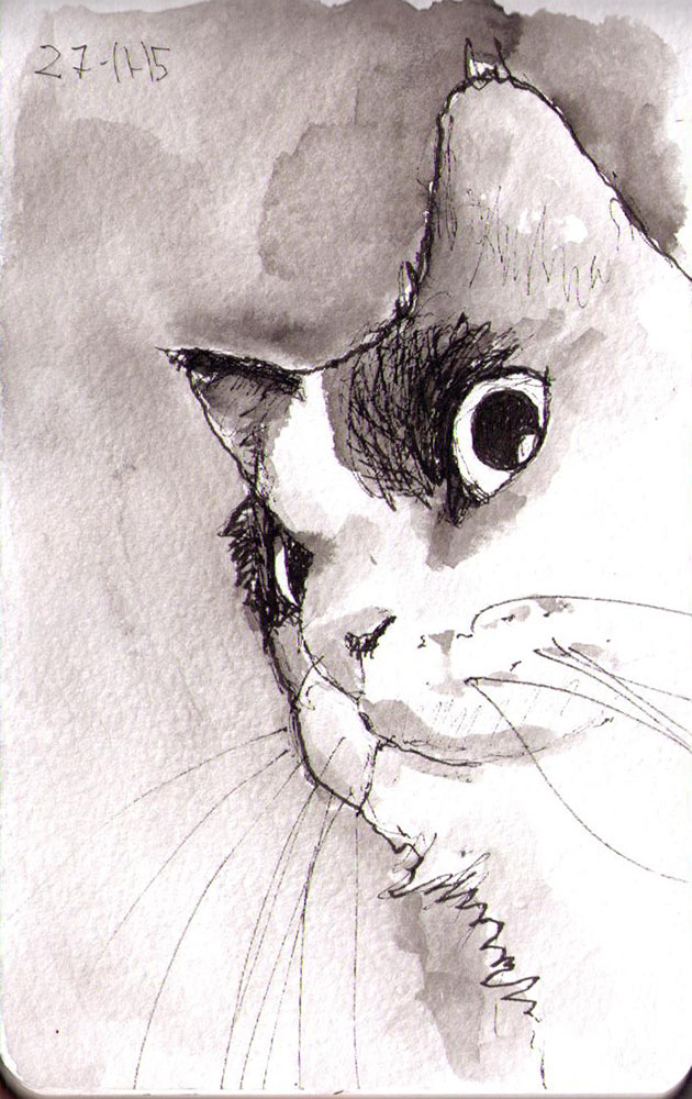 thomas-dalsgaard-clausen-2015-11-27c sketch of a cat in pen and ink