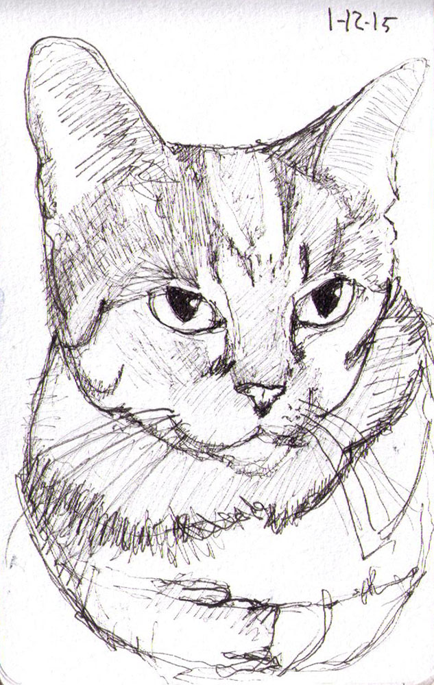 thomas-dalsgaard-clausen-2015-12-01a sketch of a cat named Lexi in pen