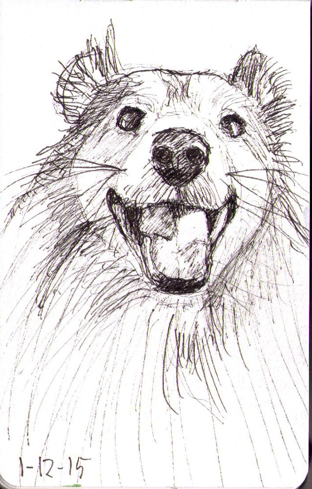 thomas-dalsgaard-clausen-2015-12-01b sketch of a happy sheltie dog in pen