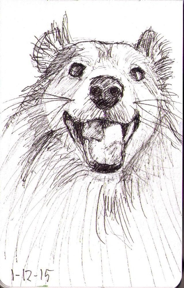 thomas-dalsgaard-clausen-2015-12-01b sketch of a happy sheltie dog in pen