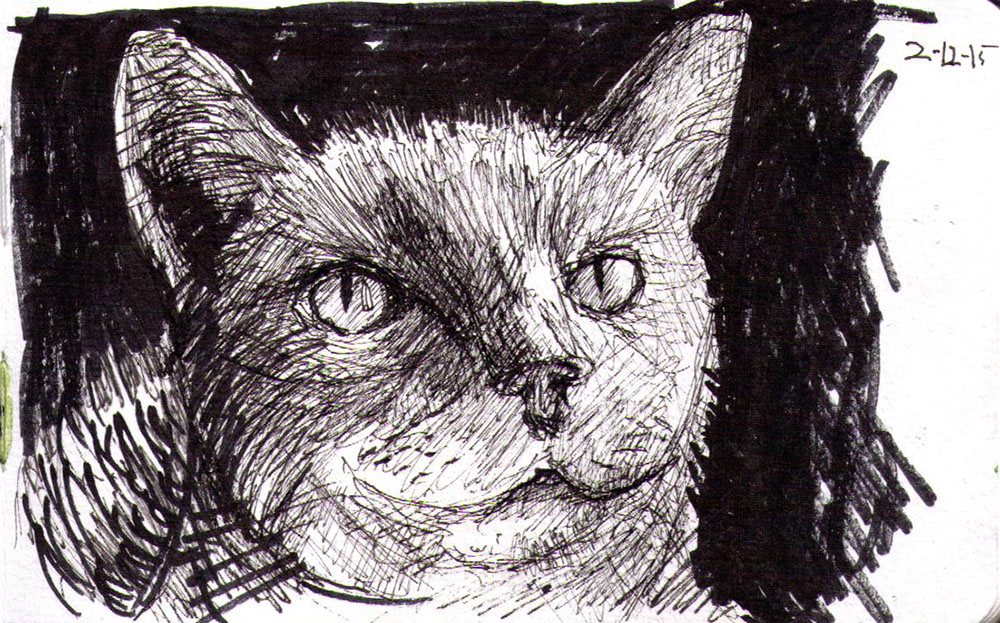 thomas-dalsgaard-clausen-2015-12-02a sketch of a cat called graphite in pen