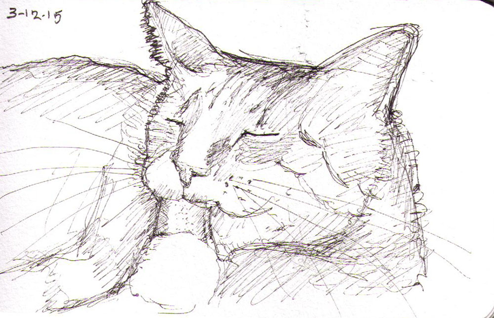 thomas-dalsgaard-clausen-2015-12-03b sketch of a cat in pen
