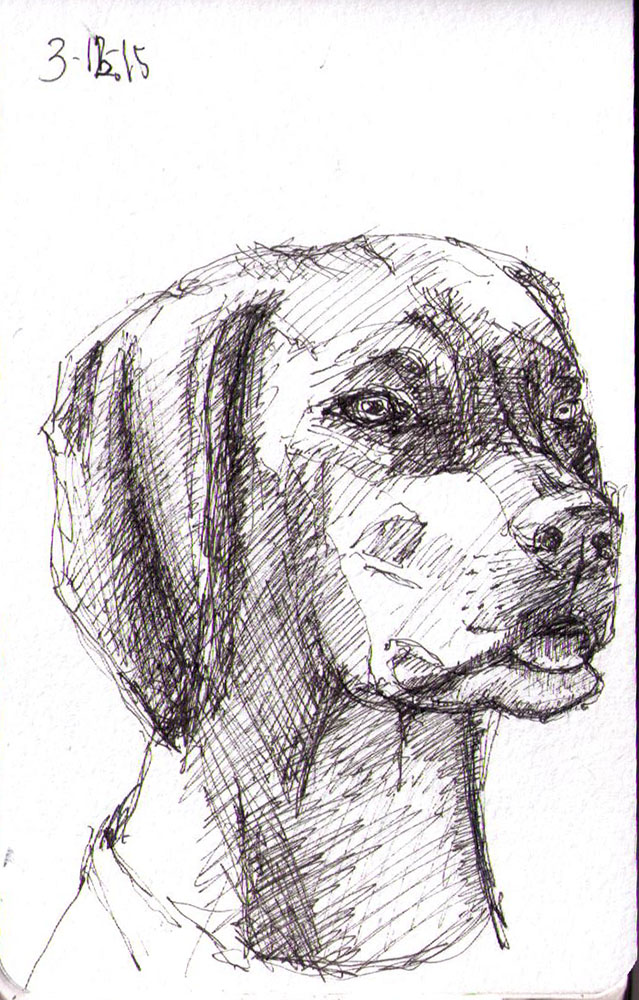 thomas-dalsgaard-clausen-2015-12-03c sketch of a dog in pen