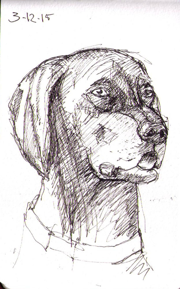thomas-dalsgaard-clausen-2015-12-03d sketch of a dog in pen