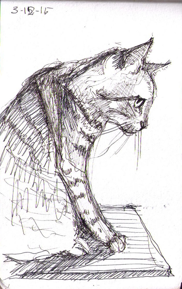 thomas-dalsgaard-clausen-2015-12-03e sketch of a cat in pen