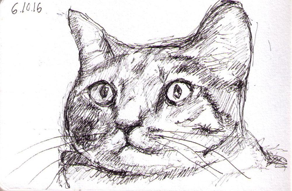 thomas-clausen-2016-10-06a-cat-pen