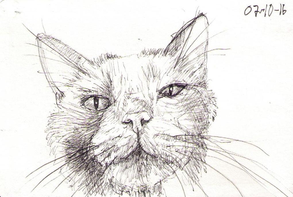 thomas-clausen-2016-10-07a-cat-avalon-pen
